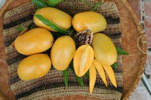 mangogodfruit