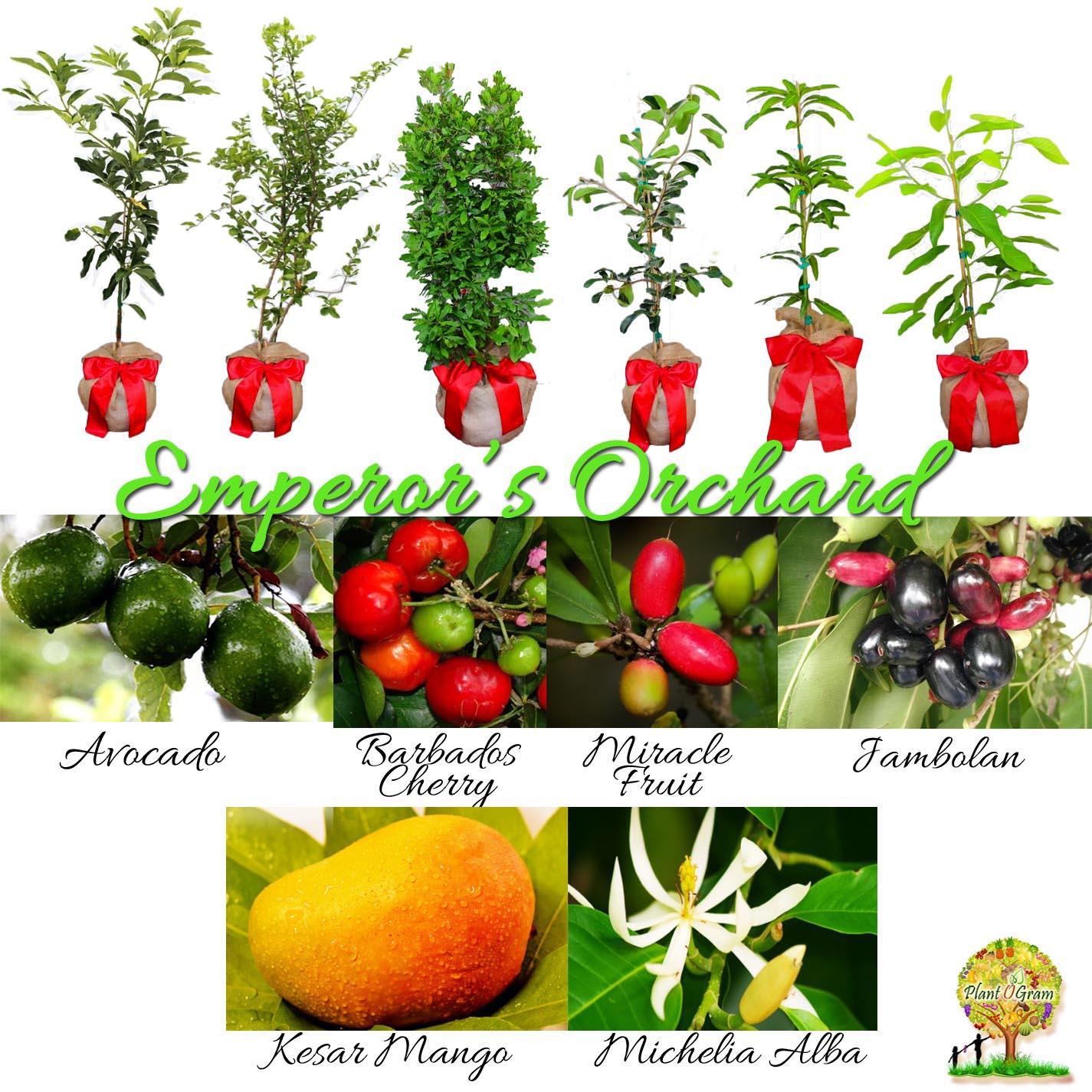 Emperor's Orchard 1.jpg